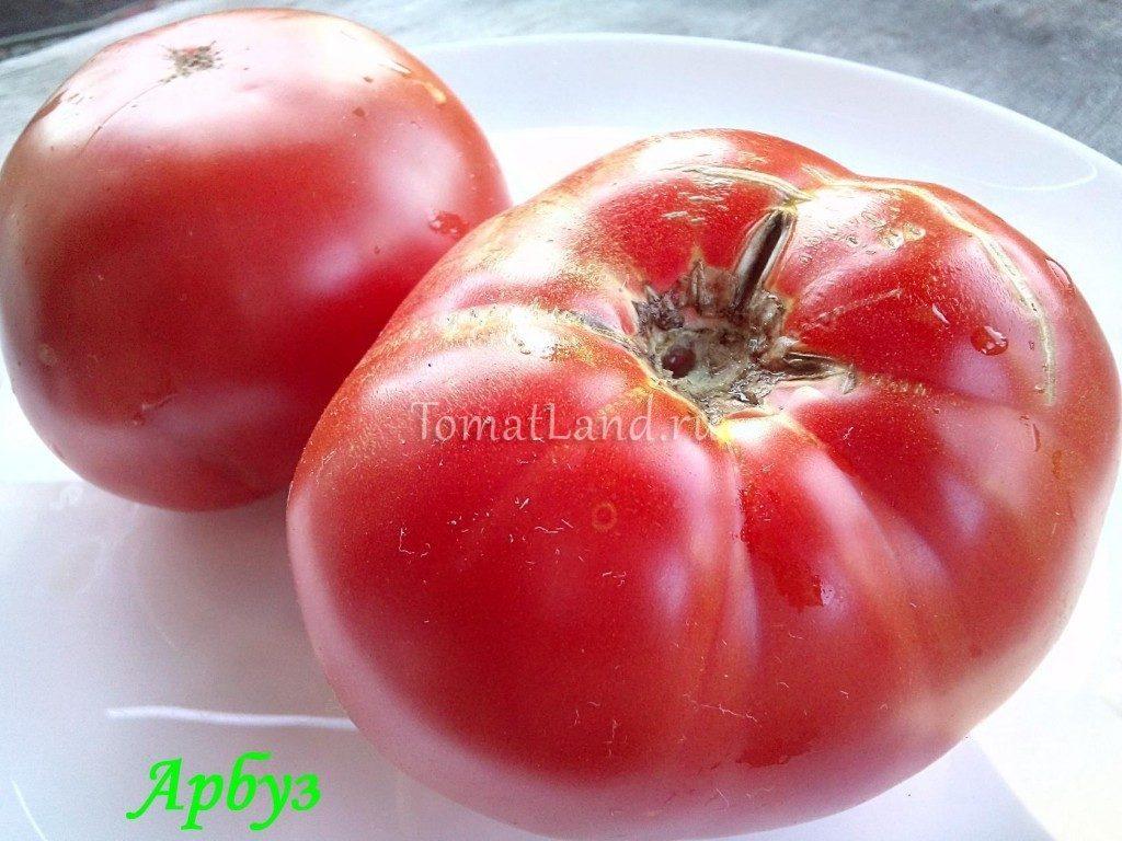 помидор сорт Арбуз фото отзывы