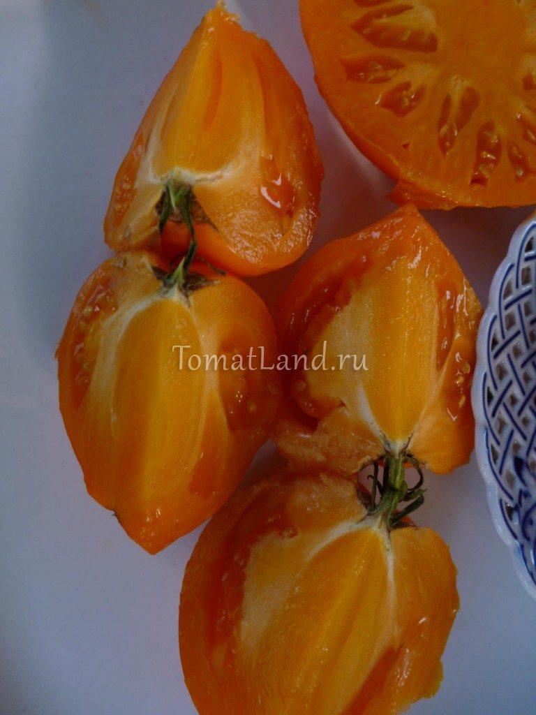 Алтайский оранжевый фото