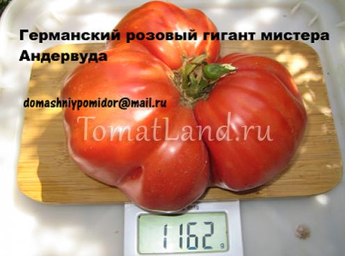 томат розовый немецкий гигант мистера андервуда фото