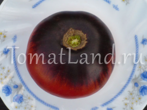 томат голубая красота