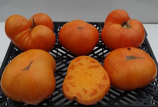 томаты мясной завтрак фото