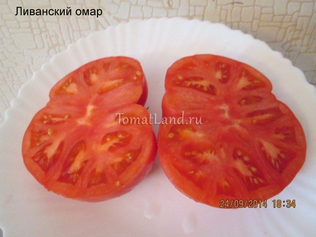 помидоры ливанский омар фото в разрезе