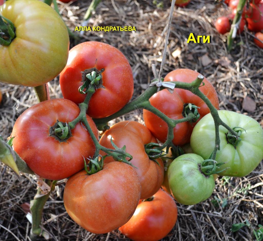 помидоры бетта описание сорта фото отзывы садоводов