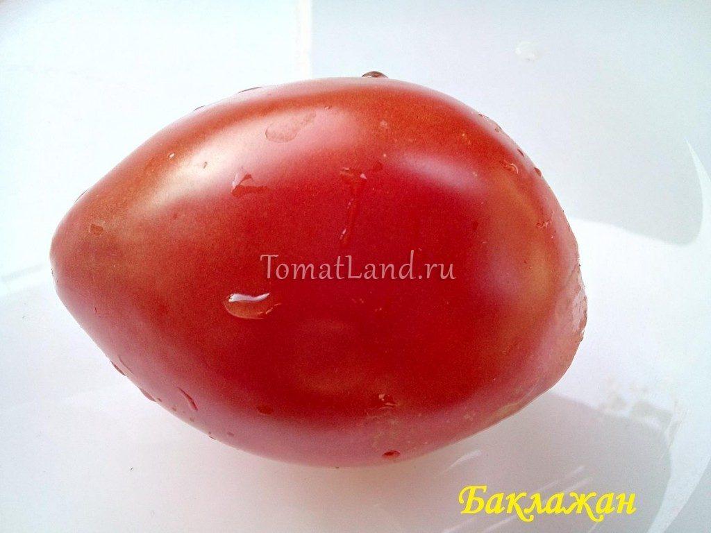 помидоры сорт баклажан фото отзывы