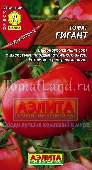 Картофелелистный томат Розовый Гигант - любовь с первого всхода