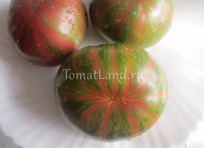 томат грин копия фото