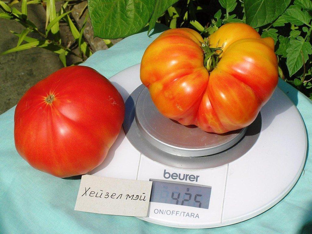 помидор хейзел мей отзывы фото