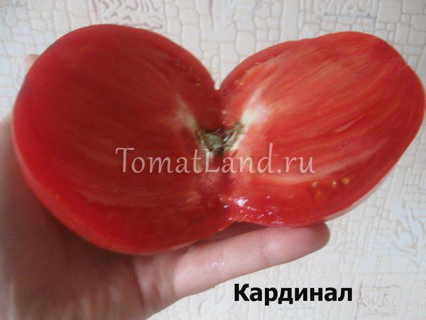 помидоры Кардинал фото