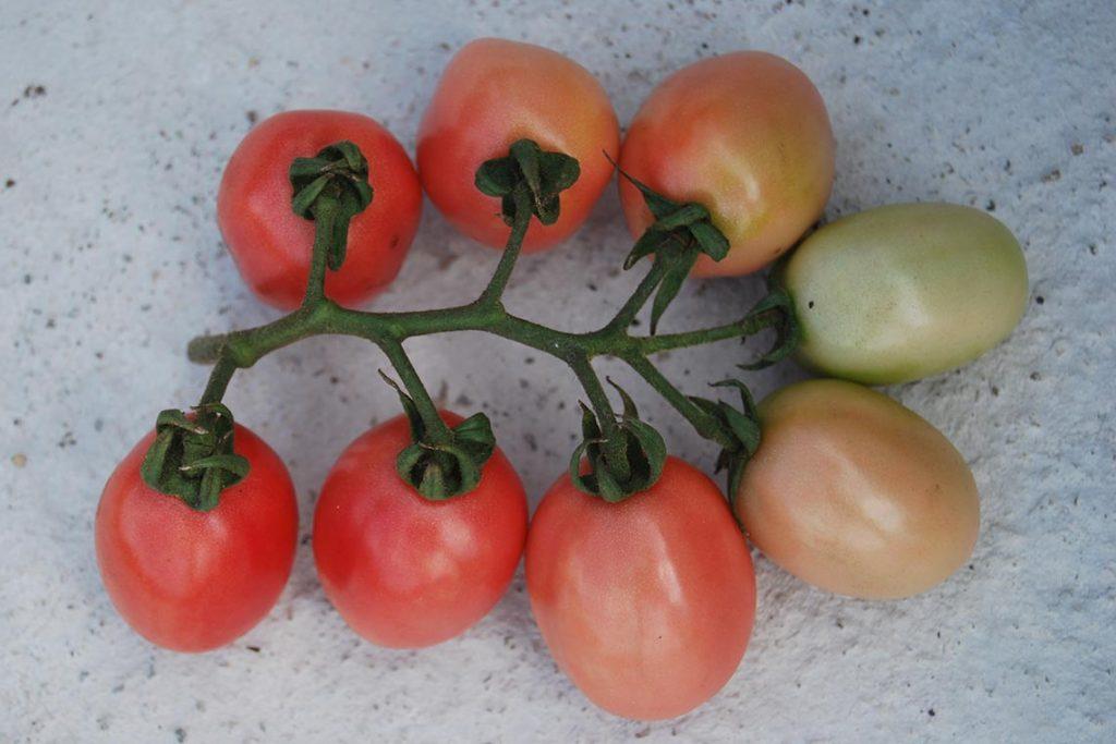 томаты эй вон пхукет фото