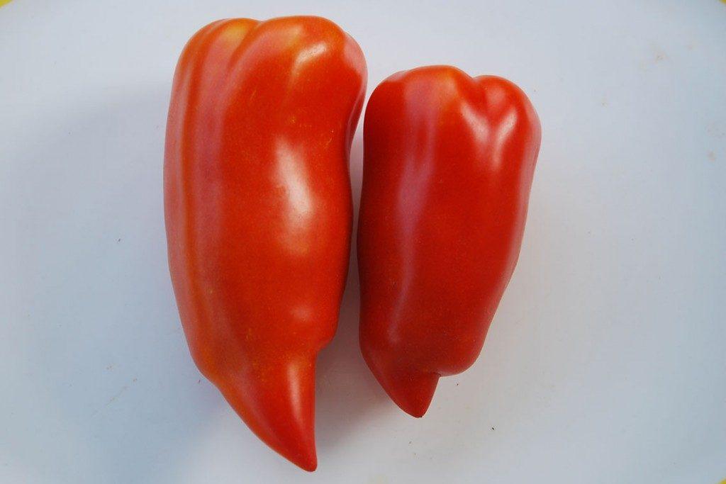 помидоры дьявол джерси фото