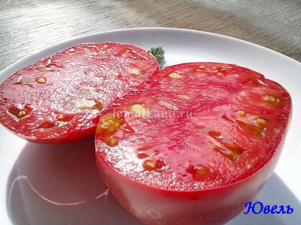 помидоры ювель фото отзывы характеристика