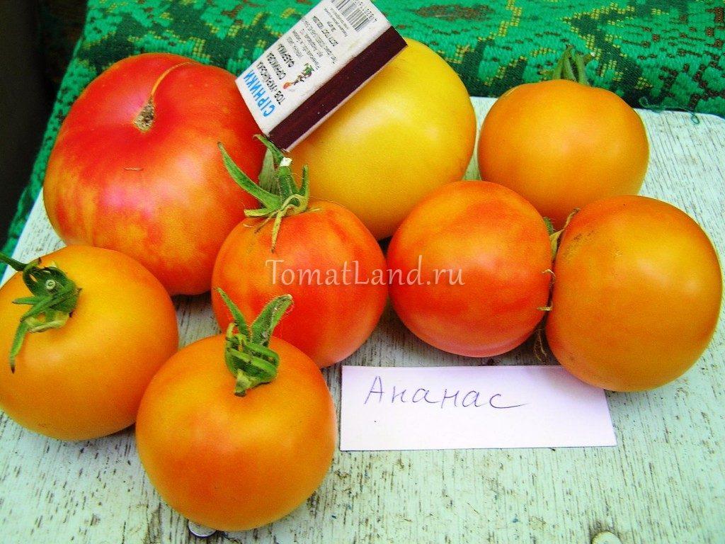 Характеристика и описание томата Золотой ананас