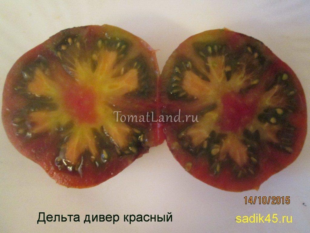томат дельта дивер в разрезе