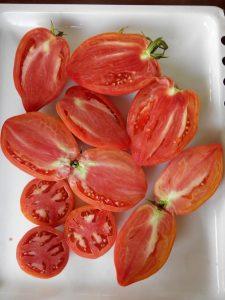 томат Подсинское чудо