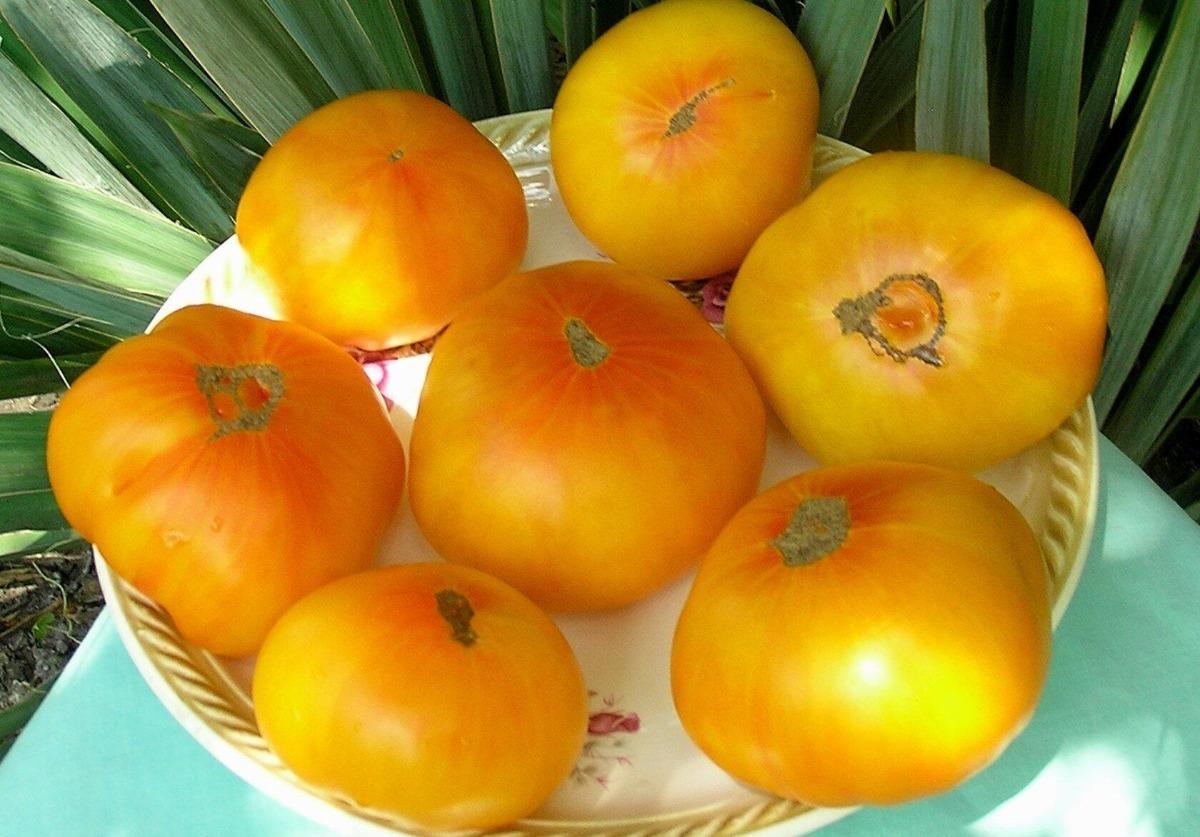 томаты золотая королева описание сорта отзывы
