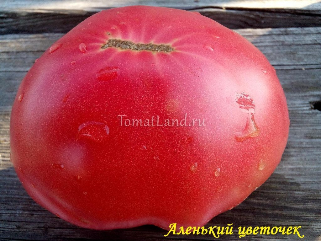 томаты аленький цветочек фото