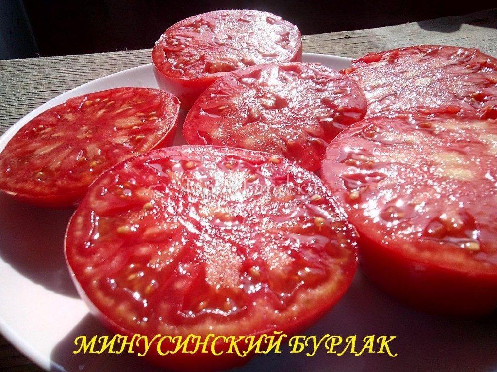 помидоры бурлак минусинский фото в разрезе