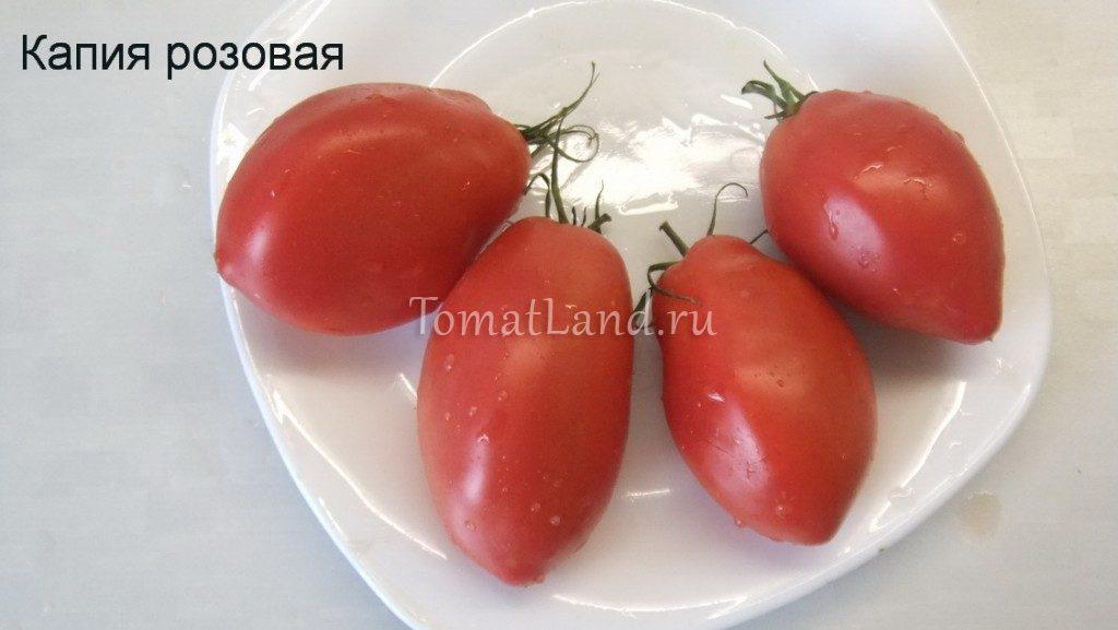 помидоры капия розовая фото спелых плодов