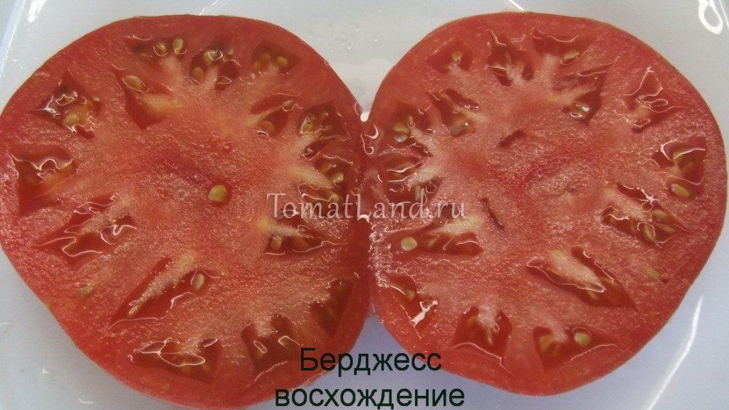 помидоры берджесс фото в разрезе