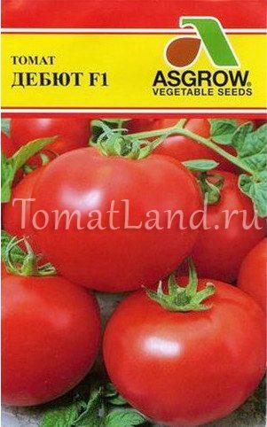 томаты дебют описание