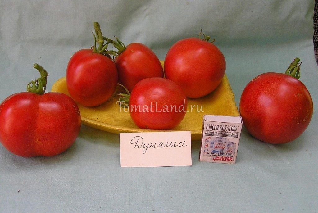помидоры дуняша фото