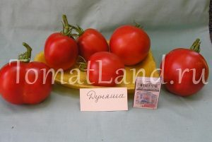 томат дуняша