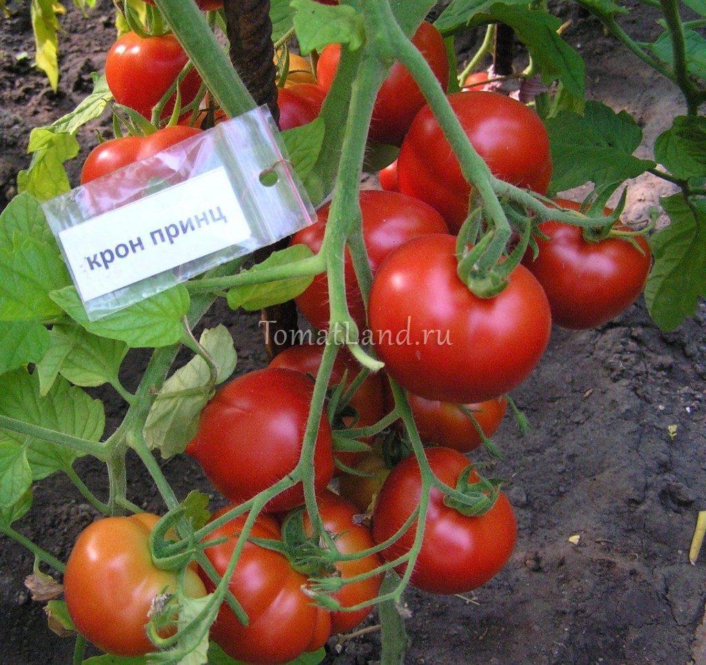 помидоры крон принц фото