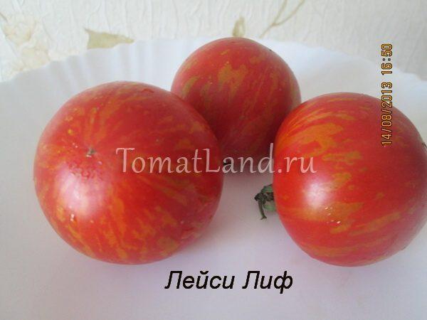 томат лейси лиф