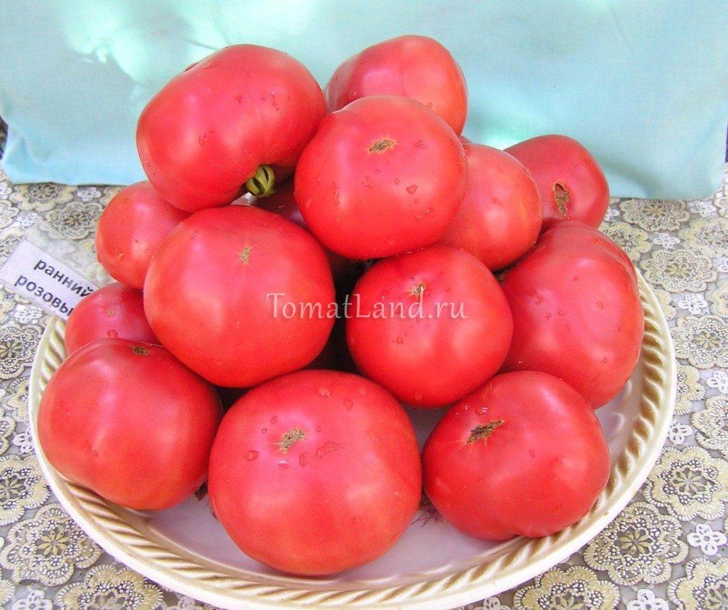 помидоры ранние розовые фото