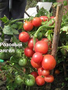 фото В. Редько