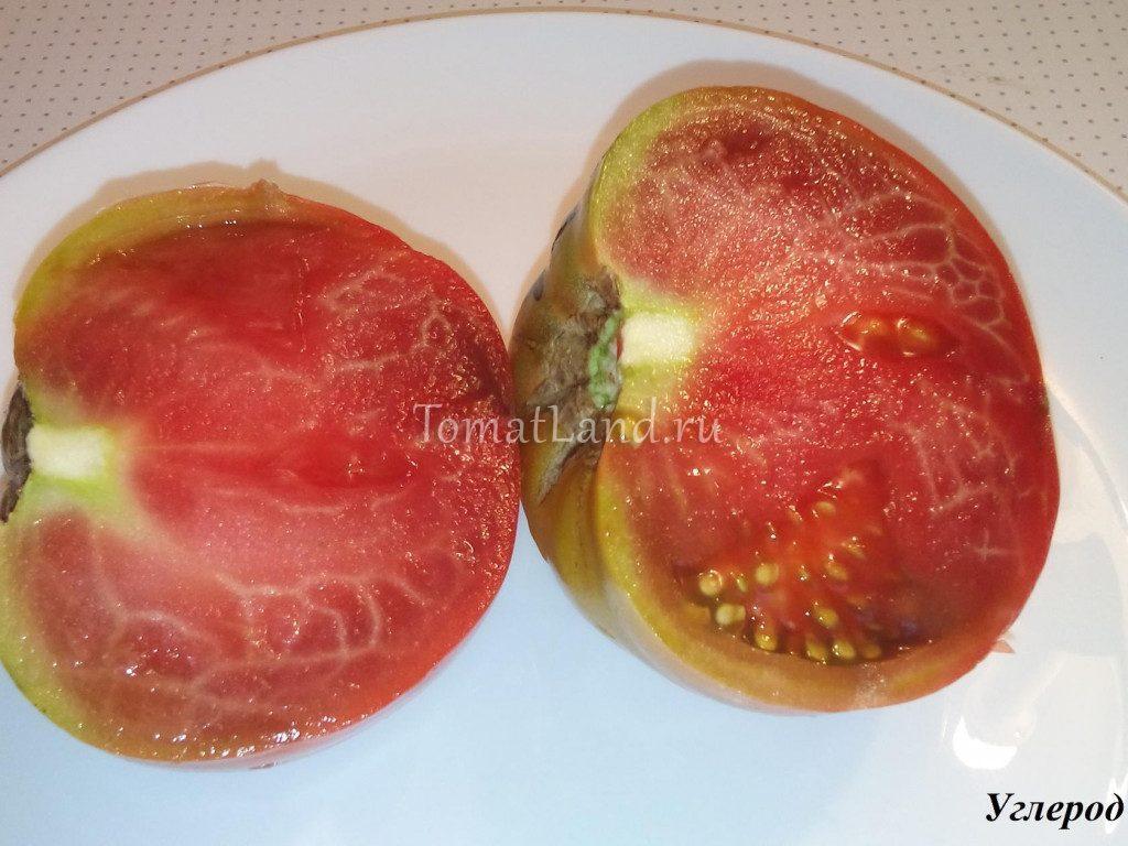 помидор углерод фото отзывы