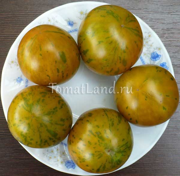 томат вэл зеленый фото