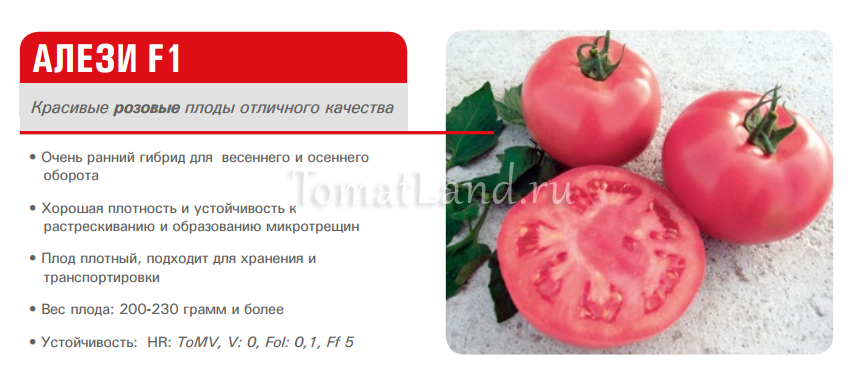 томат алези ajnj