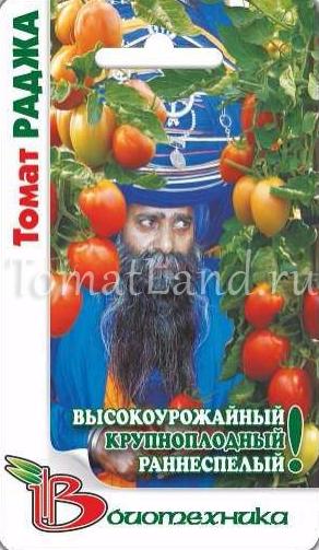 томат раджа отзывы фото