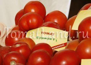 помидоры буржуй фото