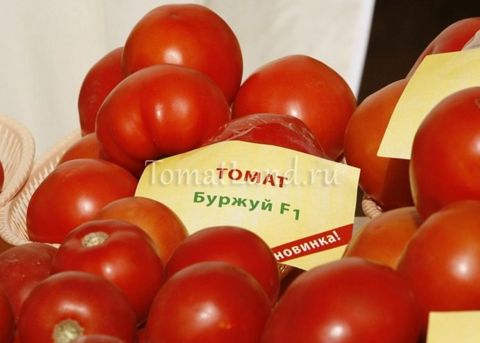 помидоры буржуй фото отзывы