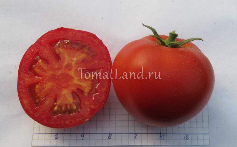 томаты жонглер фото отзывы характеристика