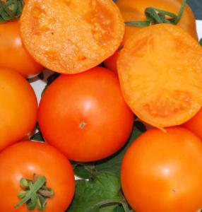томат мандаринка фото