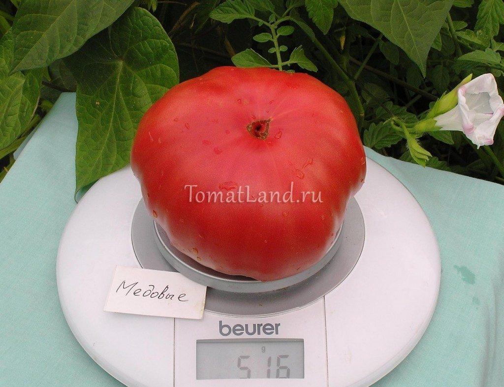 томаты сорт едовый фото