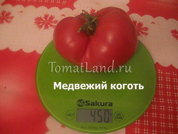 помидоры медвежий коготь фото