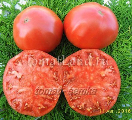 новое поколение бурчема помидоры