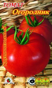 томат огородник описание