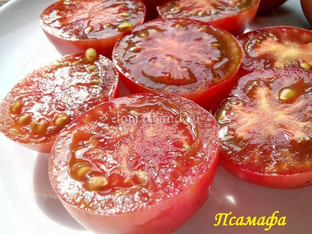 томаты псамафа отзывы характеристика