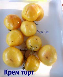 помидоры крем тор фото спелых плодов