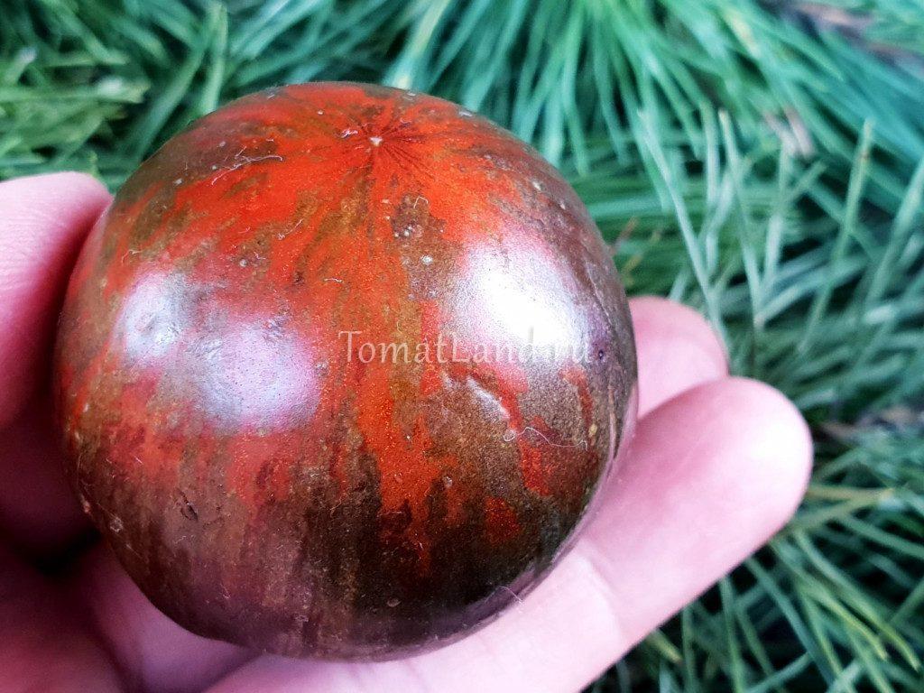 помидоры космическое затмение отзывы фото