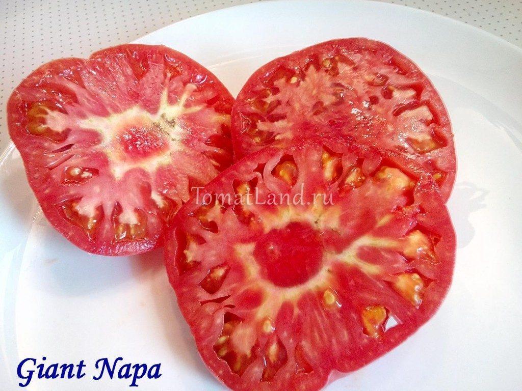 помидор гигант напы фото отзывы характеристика