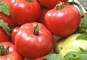 томаты адамово яблоко характеристика фото