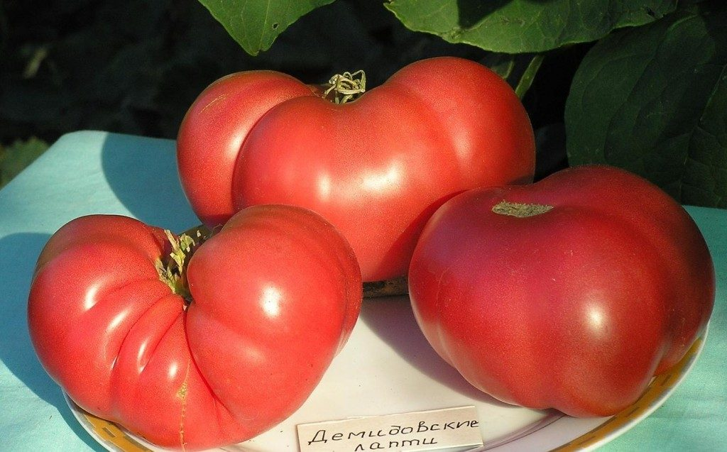 помидоры Демидовские лапти фото