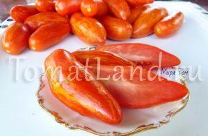 помидоры Джалпа фото