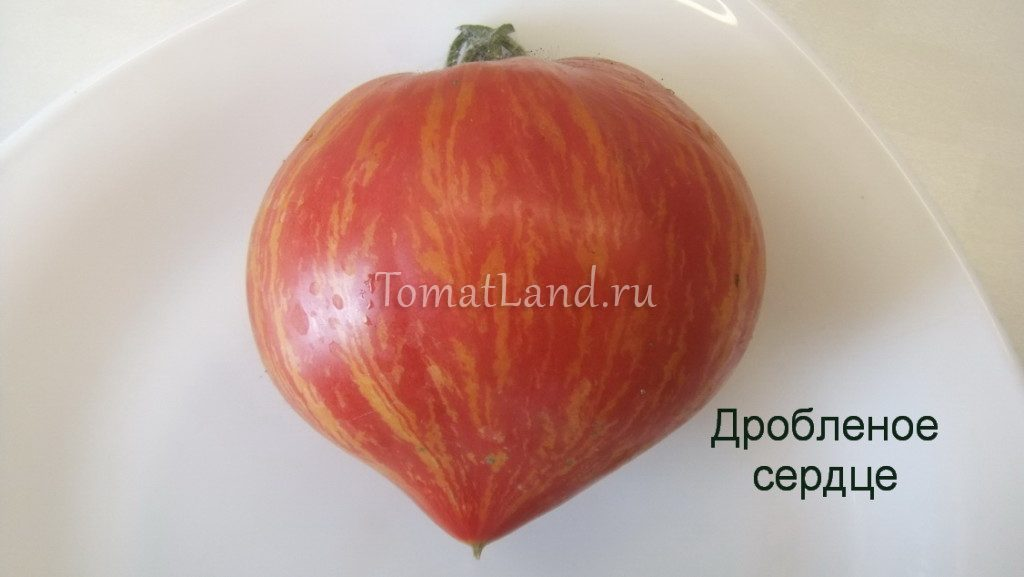 помидоры дробленое сердце фото